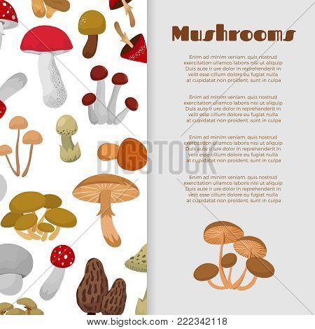 Fresh autumn mushrooms and toadstools cartoon banner design. Vector illustration