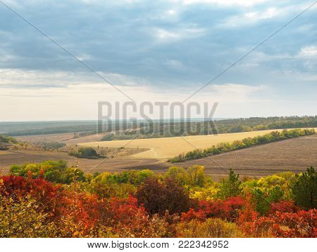 Colorful autumn landscape with views of the skyline and plowed field. Nature, rural autumnal view of pretty farmland and plants in the beautiful surroundings.