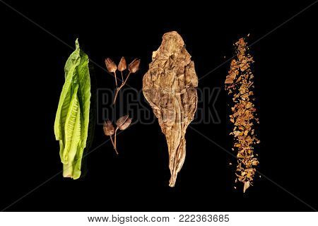 Fresh, Dried And Crushed Tobacco Leaves With Tobacco Seeds Isolated On Black Background From Above.
