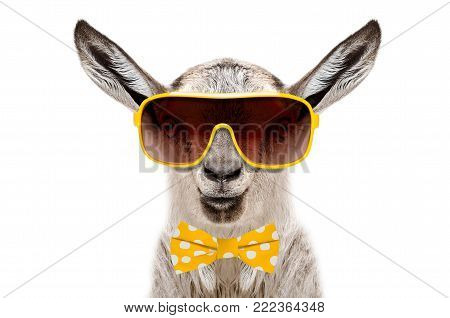 Funny goat in a sunglasses and bow tie, isolated on a white background