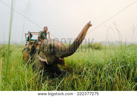 CHITWAN, NEPAL - 10 SEPTEMBER 2015: A mahout makes his elephant crouch and salutes in Chitwan National Park, Nepal.. Elephant safaris are the only safe option to get close to the one-horned rhinos.