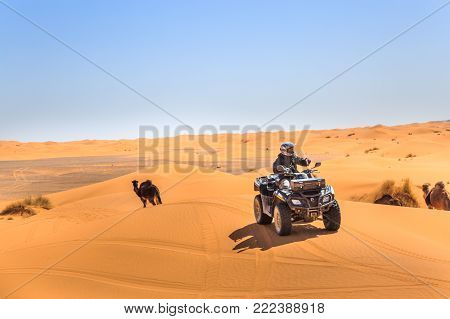 Merzouga, Morocco - February 25, 2016: A Rider On A Quad Atv Drives Over Sand Dunes Passing Camels A