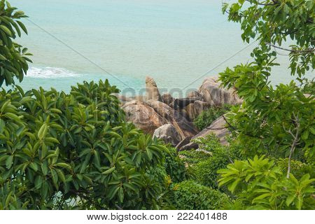 Hin Ta and Hin Yai Rocks or grandmother and grandfather rocks in Koh Samui, Thailand