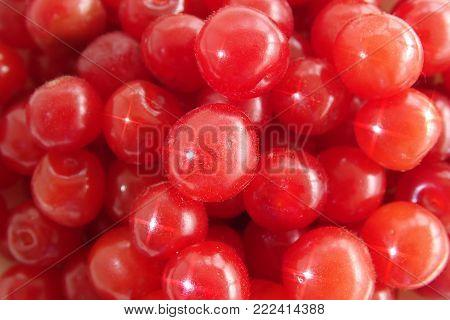 Far East cherry name'd 'Felt', leaves 'Felt' cherry