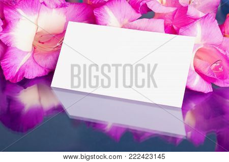 Flower spring background. Closeup of flowers. Gladiolus spring flowers and white card with free space for text, spring flower still life with spring flowers of gladiolus. Spring background with gladiolus flowers. Flower background