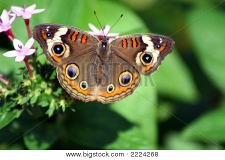 Butterflyandflower