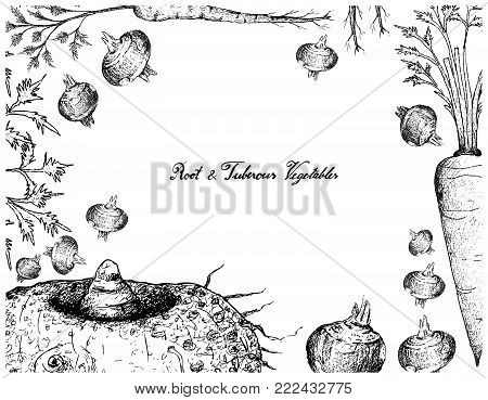 Root and Tuberous Vegetables, Illustration Frame of Hand Drawn Sketch of Water Chestnut, Hamburg Parsley, Elephant Foot Yam and Carrot Plants Isolated on White Background.