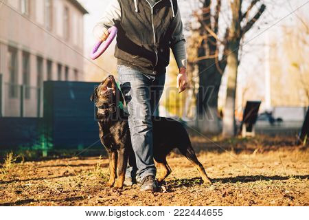 Male cynologist, police dog training outdoor