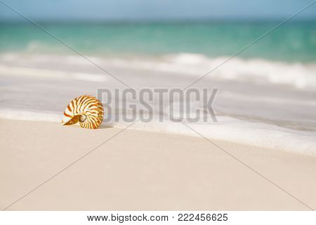 nautilus sea shell against sea waves on early morning beach , live action