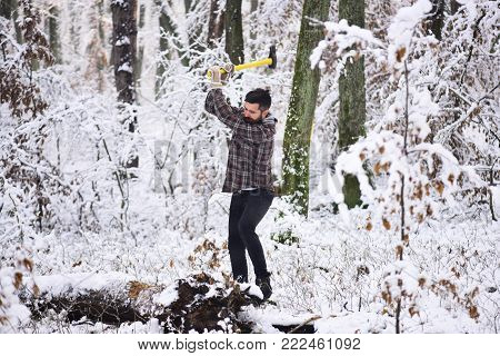 Woodsman with trees covered by snow on background. lumberjack concept. lumberjack man working in the winter forest. Man with warm gloves puts axe into tree stem in forest. Masculinity concept.