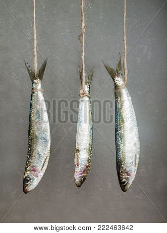 3 sardines hanging on a thread against gray background
