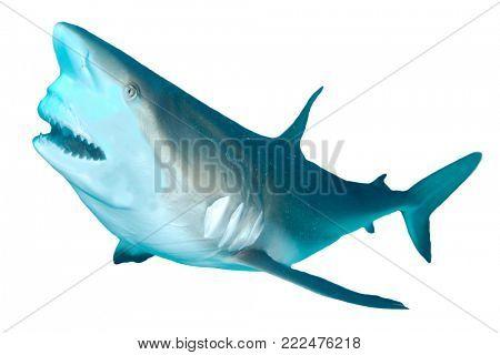 Shark bite attack on white background. Caribbean Reef Shark isolated