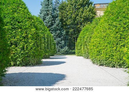 Landscaped formal garden white tapering pathway flanked by shaped orderly green conifer trees.