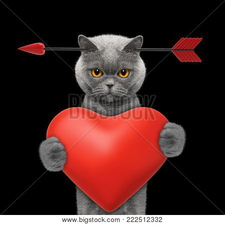Cute cat is falling in love on valentines day. Isolated on black background