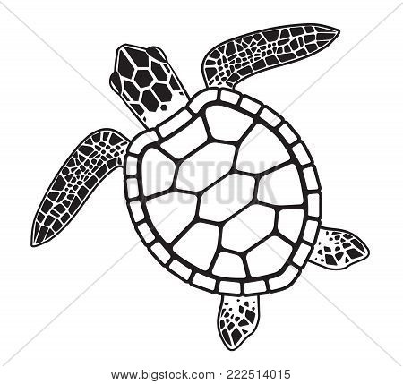 Vector graphic illustration of a Sea Turtle wildlife