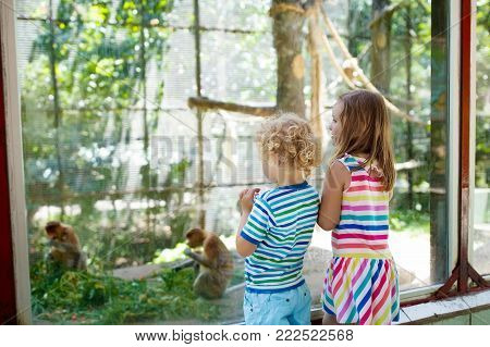 Kids Watch Elephants At Zoo. Children And Animals.