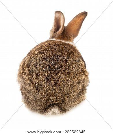 back of rabbit isolated on white background