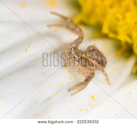 Spider on a flower in the nature. close .