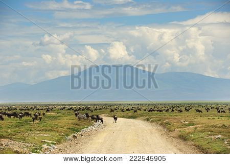 Tanzania. African dirt road to green hills with wildebeest antelopes in Serengeti national park during Great Migration. Africa