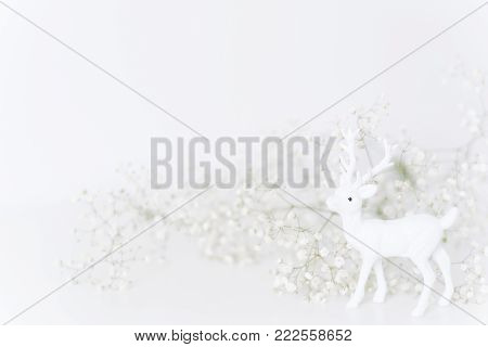 White fawn with flowers baby's breath on white bacground