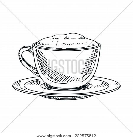 Beautiful vector hand drawn beverage Illustration. Cappuccino. Detailed retro style coffee image. Vintage sketch Element for labels design.