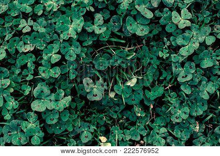 top view clover dark green pattern, natural heart shape on a clover