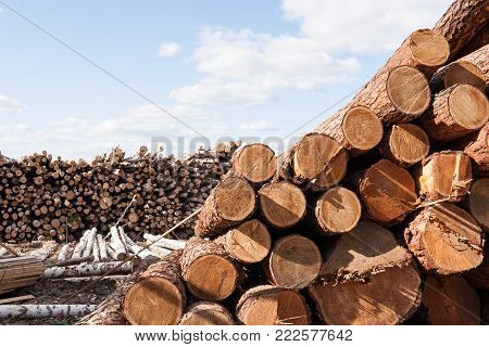 Piles of felled trees is lying on the ground a large warehouse in summer day.