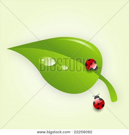 Vector leaf with a ladybug