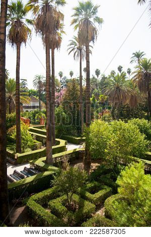 Aerial view at the gardens of the Alcazar with green maze and palm trees in sunny summer day, Sevilla, Spain