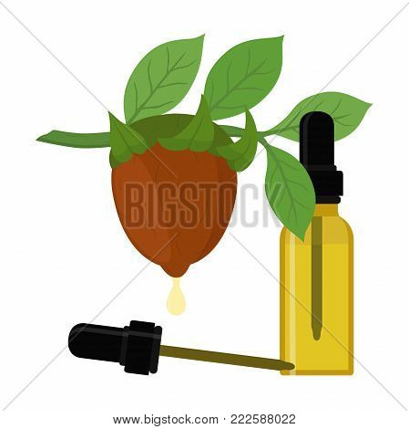 Vector jojoba branch, simmondsia chinensis,cosmetics plant, organic oil, aroma herb in essential oil, bottle with liquid. Great for medicine, perfume, aroma therapy. Made in cartoon flat style