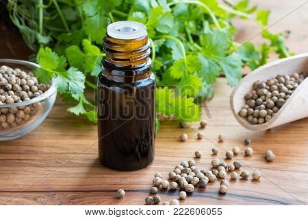 A dark bottle of coriander essential oil with coriander seeds and fresh cilantro leaves in the background