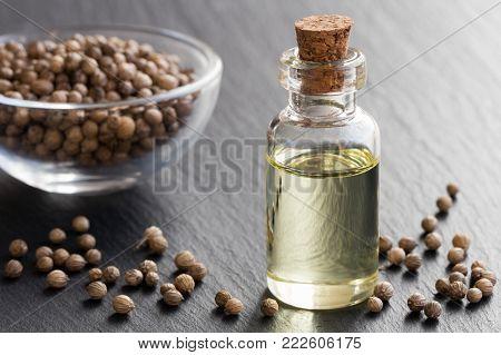 A bottle of coriander essential oil with coriander seeds on a dark background