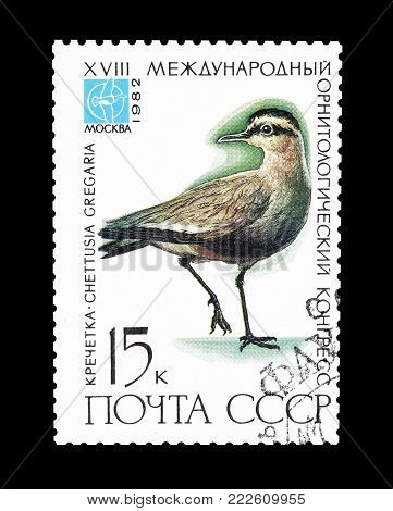 SOVIET UNION - CIRCA 1982 : Cancelled postage stamp printed by Soviet Union, that shows Sociable Plover.