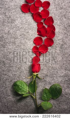 Red rose and a flower petals wave - Valentine day card with a single beautiful red rose and its petals spread on a vintage fabric background in the shape of a wave.