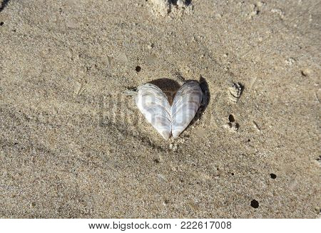 Heart shaped sea shell found on the beach prompts ideas for messages of love in this overhead photo.  Copy space.  Love concept.  possible Valentine's Day.
