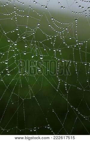 Spider Web covered with dew drops, diamond necklace-work of a spider