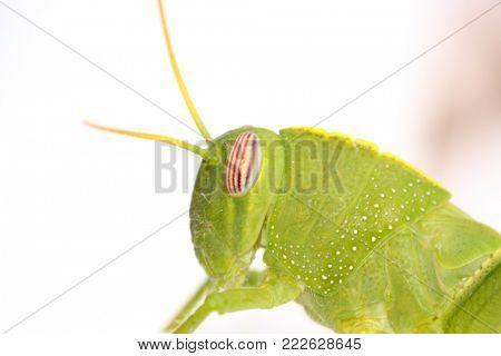 grasshopper in the nature