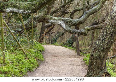 Coastal Forest Scenery