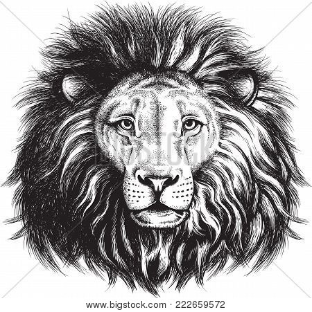 Black and white vector sketch of a majestic lion's face