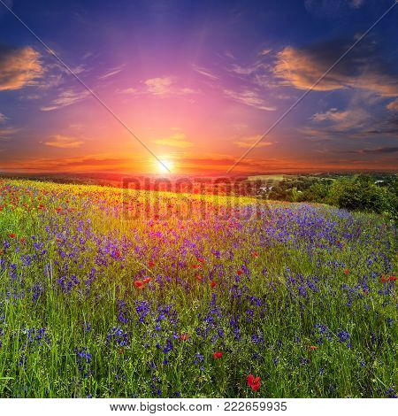 Poppy and flowers on the field. landscape. fantastic view of the sky  over a colorful field of flowers. picturesque scene. breathtaking scenery. wonderful landscape. original creative images. shallow depth of field