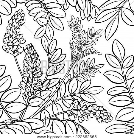 licorice plant seamless pattern on white background