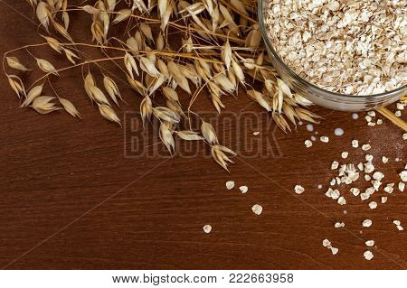 Oat ears stems and oat flakes in a bowl on a dark brown wood background. Top view. oat flakes small size grind. Copy space in bottom. Useful fiber-rich product. Dietary breakfast from healthy foods.