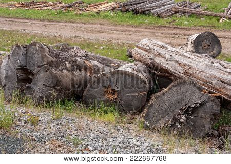 Large abandoned old weathered logs are lying on grass.