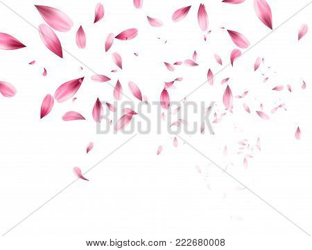 Pink sakura falling petals background. Vector illustration EPS10