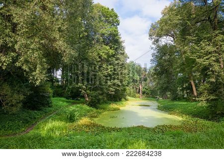 A small lake in the forest is covered with duckweed