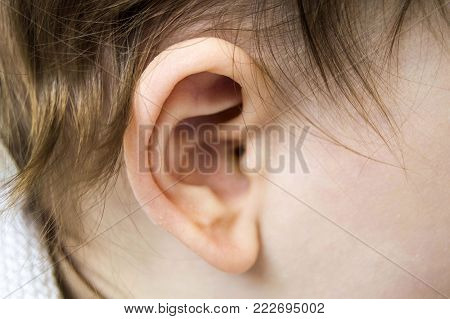 baby ear and ear droppings, ear cleaning is important in infants.