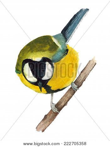 Watercolor image of great tit sitting on the branch on white backgroung