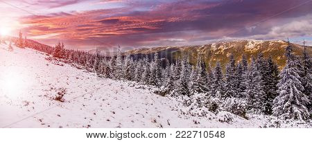 Wonderland scene. Colorful landscape at the winter sunset in the mountain forest. majestic sky over the mountain in morning. picturesque dramatic scene. beauty of the world. creative artistic image