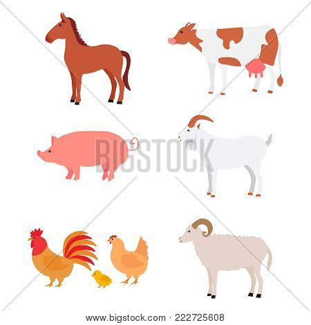 Large multicolored set cute home pets. Farm animals. Cartoon animals collection. Include horse, cow, pig, goat, ram, cock, chicken. Isolated on white background. For books. Flat vector illustration.