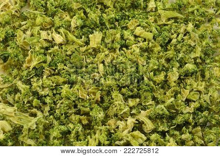 Close up of broccoli with severe freezer burn and dehydration due to improper storage or packaging or forgotten in back of freezer for lengthy time